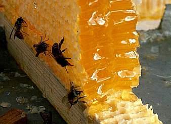 мед и воск были одними из главных предметов экспорта из земель прикарпатья.