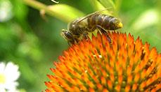 http://airbees.com/uploads/posts/2011-01/1296119731_bee2.jpg