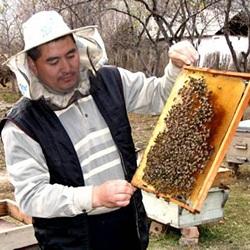 В Казахстане чиновники требуют идентифицировать пчел с помощью  микрочипов