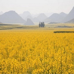 Обязательные требования во время опрыскивания цветущих растений химическими веществами