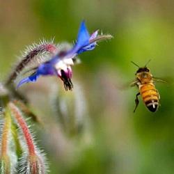 Исследователи считают, что в Америке главной причиной гибели пчелиной популяции является клещ