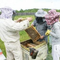 В Семее пчеловодам нужна поддержка городского акимата