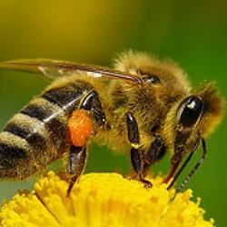 Пчеловоды Приморья в скором времени получат правовую поддержку государства