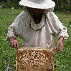 Пчеловод Красноярского края выплатит компенсацию покусанному пчелами соседу и его семье