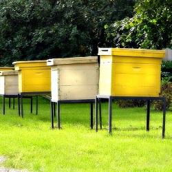 В Америке пчеловоды и фермеры несут большие убытки