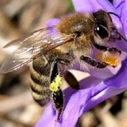 В доме пчелы могут  обогревать стены и охранять жилье