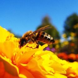 В Приморье дачники страдают от пчелиных укусов