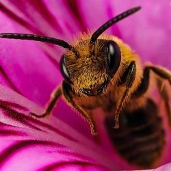 На совещании в Пензенской области выясняли причины массовой гибели пчелиной популяции